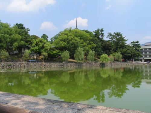 sarusawaike.jpg