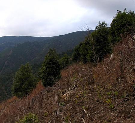 saruyama_10.jpg
