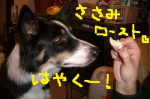 ワンコおせちと雑煮 041