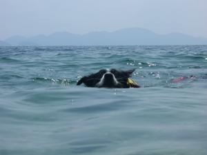 琵琶湖 048