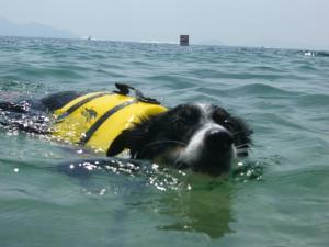 琵琶湖 049
