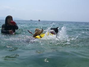 琵琶湖 064
