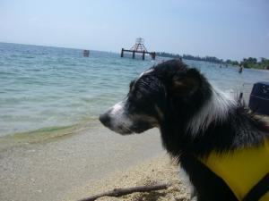 琵琶湖 061