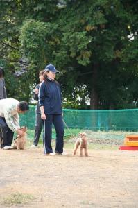2008-11-2トラスト練習会 014