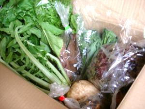 定期便野菜