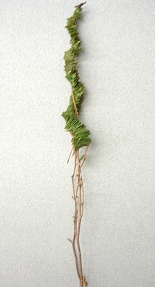 葉で作るかたち(アップ)