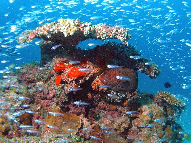 珊瑚の傘で雨宿り