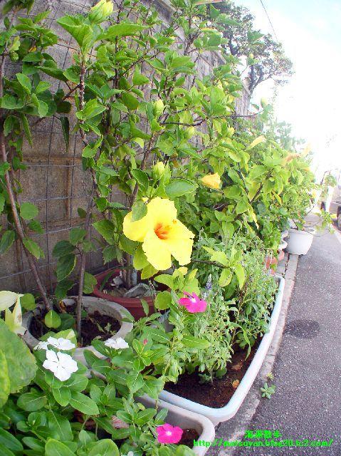 軒先に会ったきれいな花々。