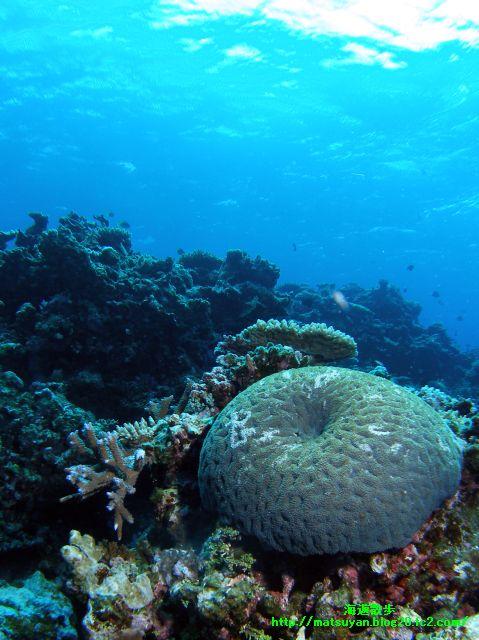 竹富南サブマリンの珊瑚