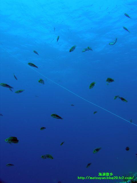ロープの周りに舞う魚達