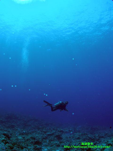 蒼い海を漂う