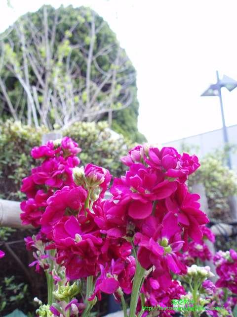 見学デッキの花壇の風景
