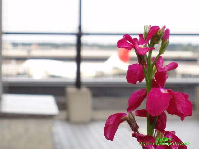 花壇から飛行機を望む