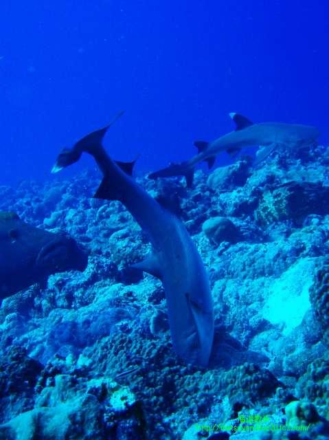 むさぼりつくサメ