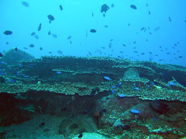 柏島の珊瑚礁