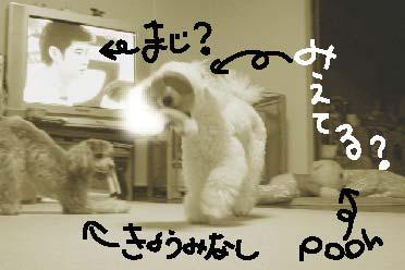 2006.11.17-f.jpg