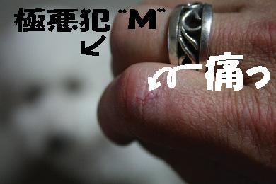 20070120233222.jpg