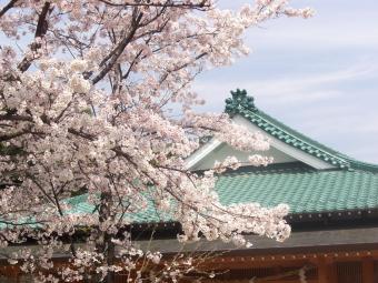 龍田大社の桜