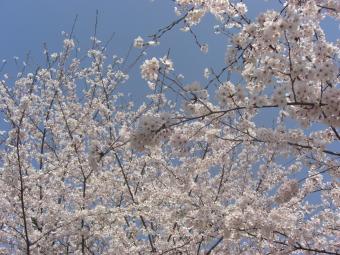 高取町上子島砂防公園