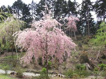 東吉野村 天空の庭