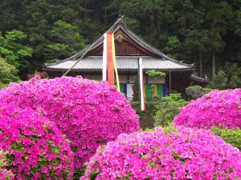船宿寺 つつじ