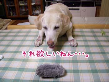 20061222005901.jpg