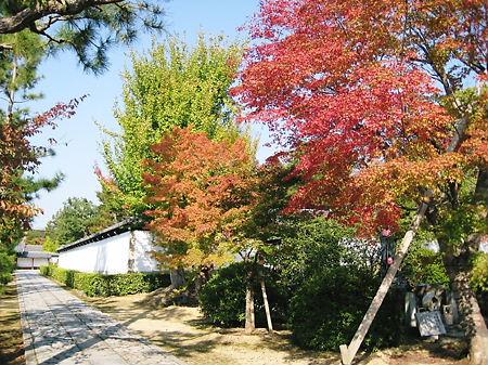 京都 智積院のモミジ