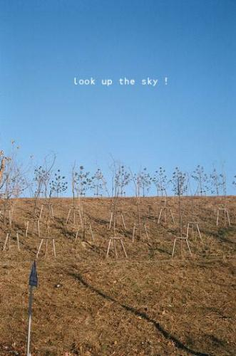 look up the sky!