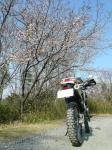 端上林道桜