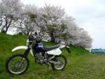 桜川河川敷2