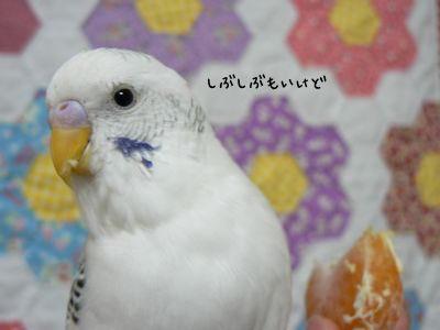 みかんバニ1