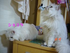 20070620112647.jpg