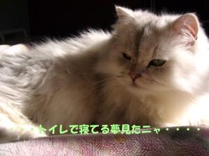 20071101212943.jpg