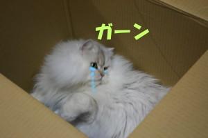 ゼジイチ1 066あ