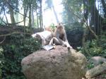 猿と対峙する日本人