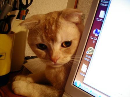 047_convert_20081030185754.jpg