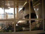 上野駅のジャイアントパンダ