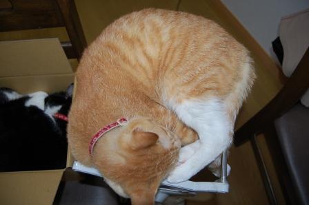 猫おやすみ中