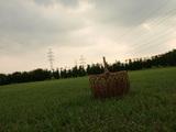 0002_20081108043835.jpg