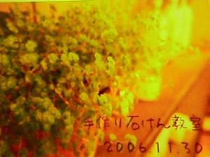 20061205002504.jpg