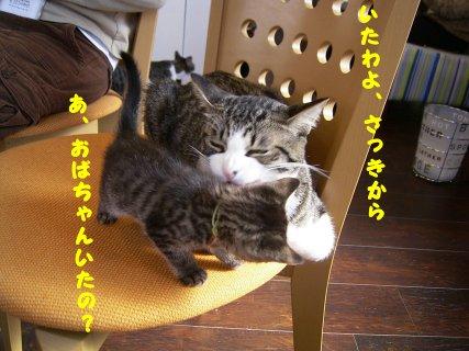 0603cats10.jpg