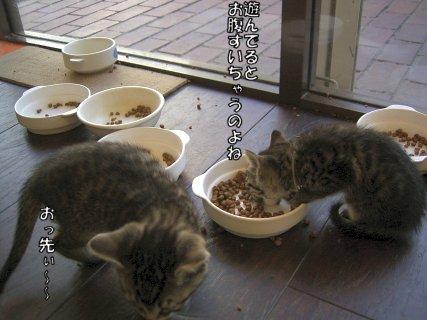 0603cats12.jpg