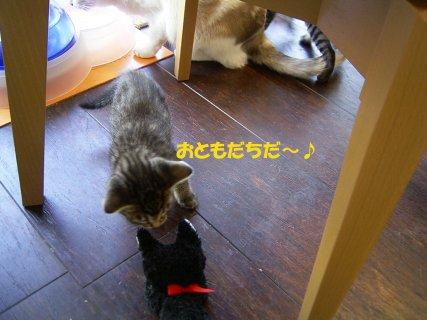 0603cats2.jpg