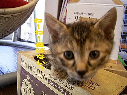 0603cats7.jpg