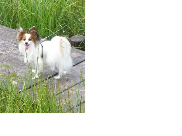 snap_milk522_20099316747.jpg