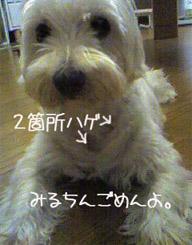060713_1521~0001.jpg