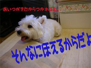 20050812133219.jpg