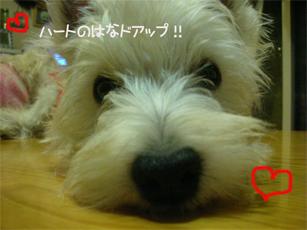 20051101203015.jpg