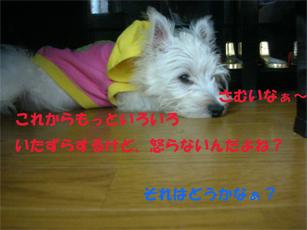 20051120213740.jpg