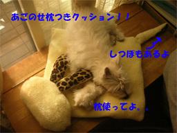 20051121170421.jpg